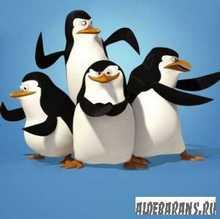Пінгвіни з